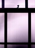 Gbp window